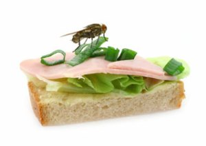 home-fly-sitting-on-delicious-ham-sandwich